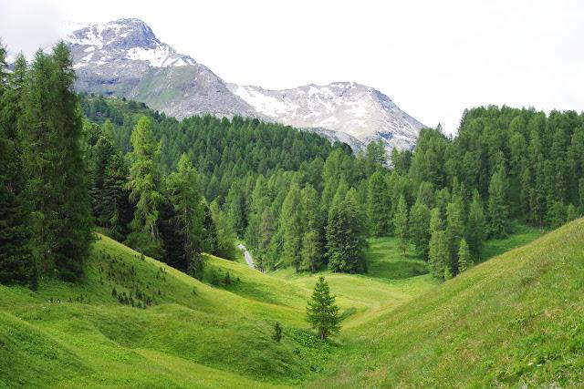 Entre Sils-Maria et Fex, 1900 m (Grisons, CH), 10 juillet 2013. Photo : J.-M. Gayman