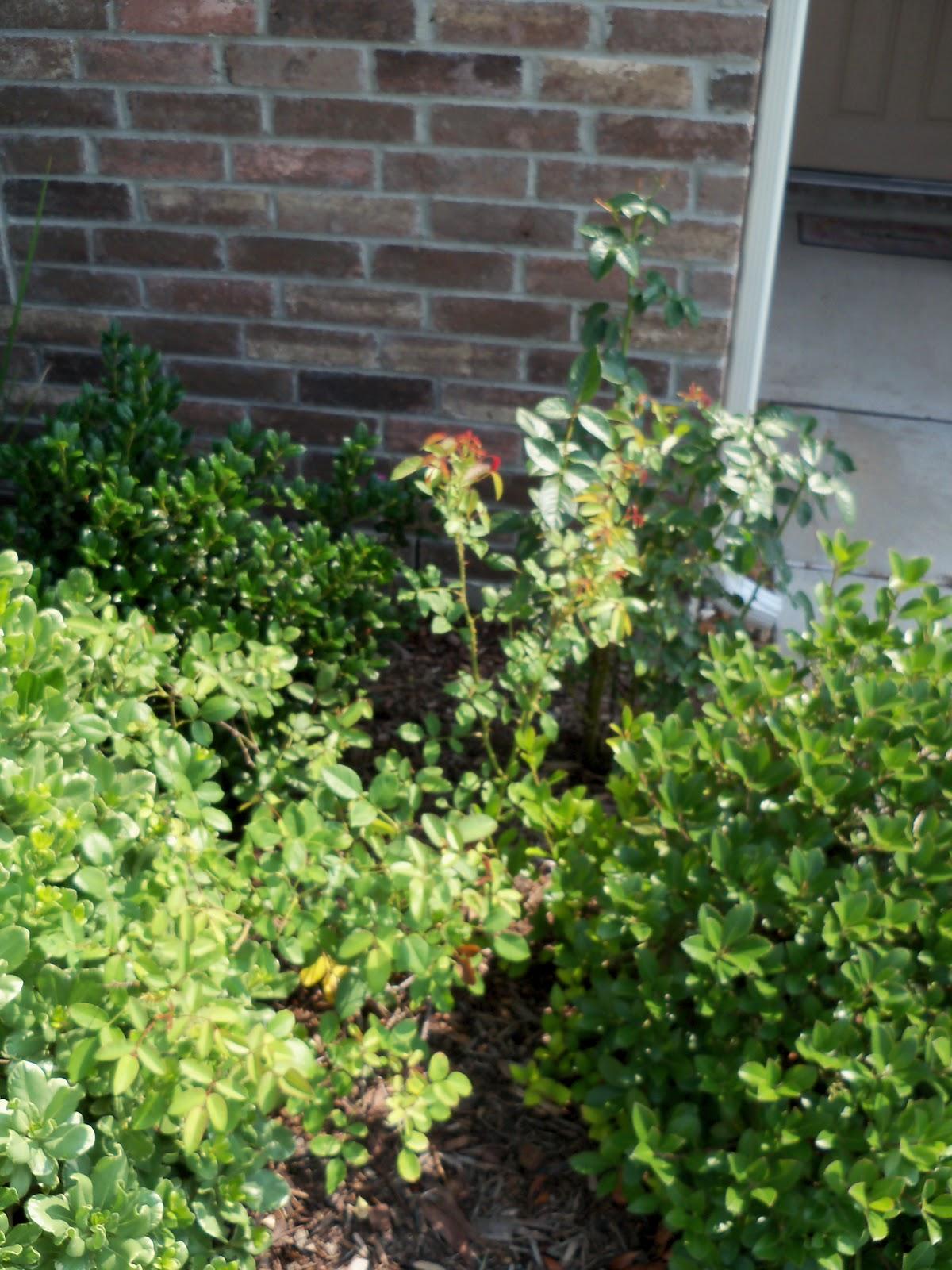 Gardening 2010, Part Two - 101_3499.JPG