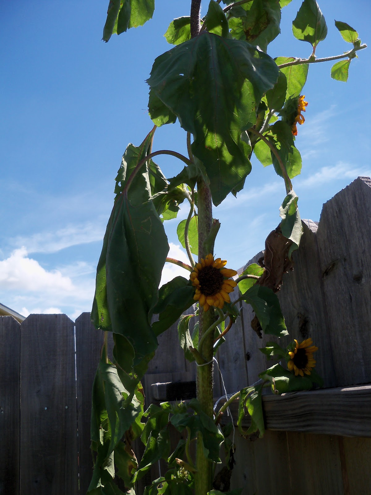 Gardening 2010, Part Three - 101_4352.JPG