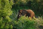 Der er selvfølgelig også elefanter ved Olifants River.