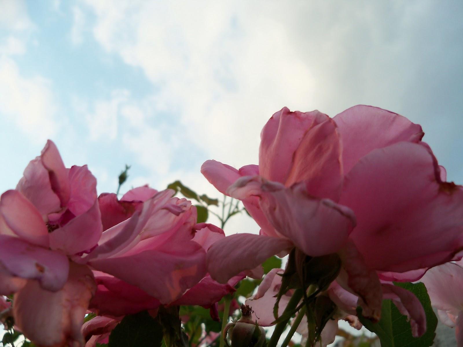 Gardening 2012 - 115_2141.JPG