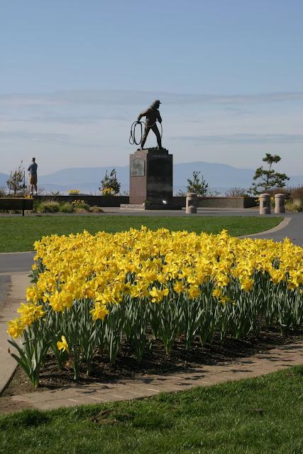 Zuanich Park Daffodils
