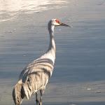 2011_10_23_Reifel_Bird_Sanctuary