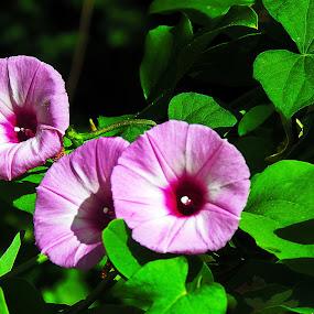 Tri Purple by Grady  Welch - Flowers Flowers in the Wild ( flowers, vibrant, green, triple, purple )