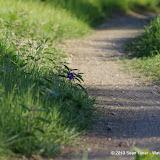 2013 Spring Flora & Fauna - IMGP6487.JPG