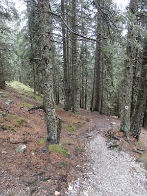 Auf dem Weg zum Waldraster Jöchl