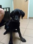 Chase-Serwatka-veterinary-hospital-haverhill-dog.jpg
