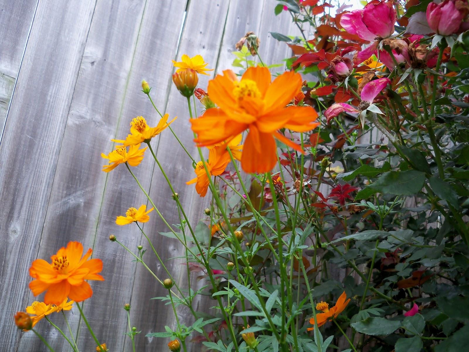Gardening 2012 - 115_1981.JPG