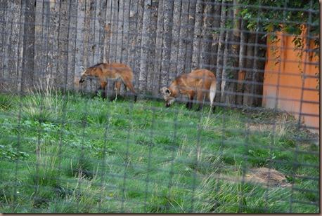 08-17-16 Boise Zoo 09