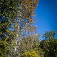 2011 04 25 Mt Lofty Botanic Garden - IMG_6452.jpg