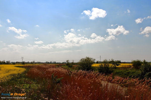zuławskie klimaty - rzeka Tuga