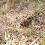 2008_04_11_Tower_Hill_Reserve_Mt_Eccles
