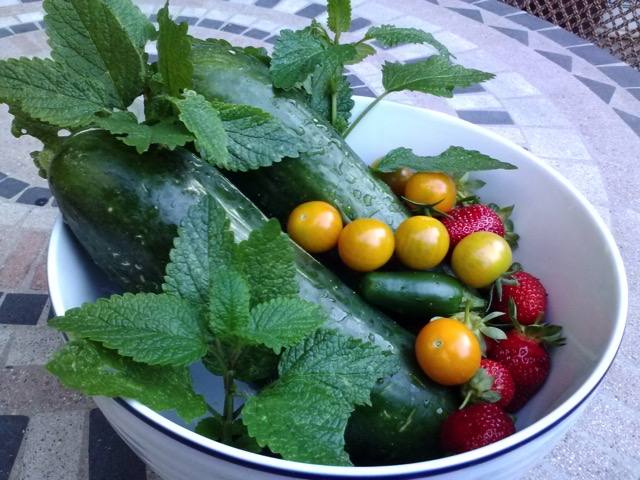 Patio Garden Harvest