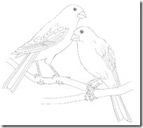 aves colorear (1)