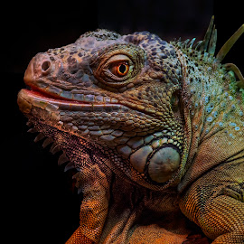 by Stanley P. - Animals Amphibians