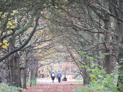 Track through woodland by Martlesham Heath