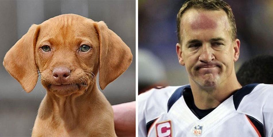 [celebrity-look-alikes-animals-16%5B64%5D]