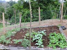 8 X 10 raised bed garden @ Beit Lechem