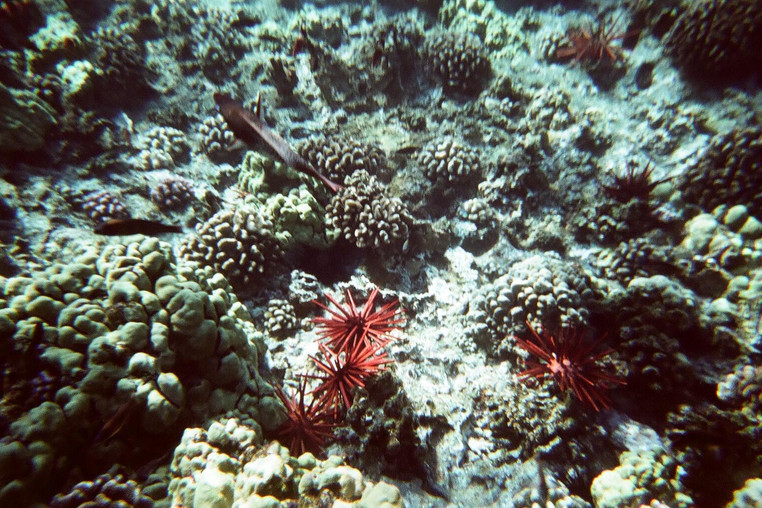 Hawaii Day 7 - 80540005.jpg