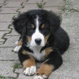 Domače živali-home animals - P7080145.JPG