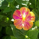 Gardening 2012 - 115_1542.JPG