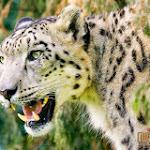 Animal 031_1280px.jpg