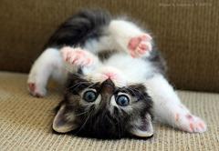 Cute=Cat01 (1)
