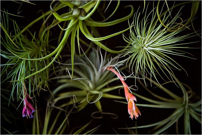jardines verticales jardín vertical living wall green wall nebula plantas aéreas tillandsias