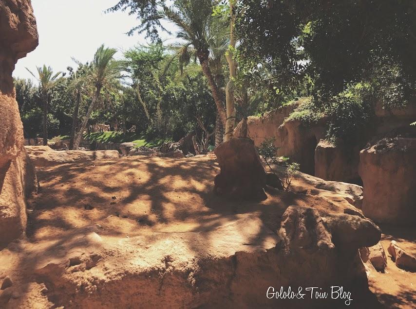 Lémures en Bioparc Valencia
