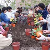 cultivo de plantas florales perennes - 100_1661.JPG