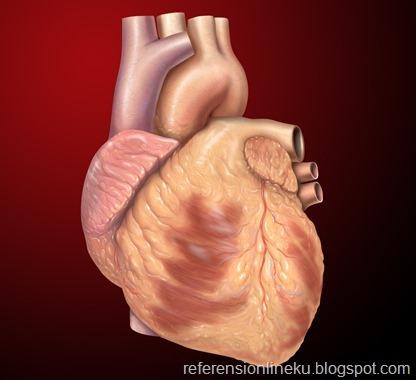 Anatomi jantung manusia