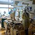 """النمسا تسجل 2278 إصابة جديدة و46 حالة وفاة بفيروس """"كورونا"""""""