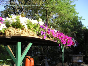 toiture réalisation de jardin suspendu rien de plus simple