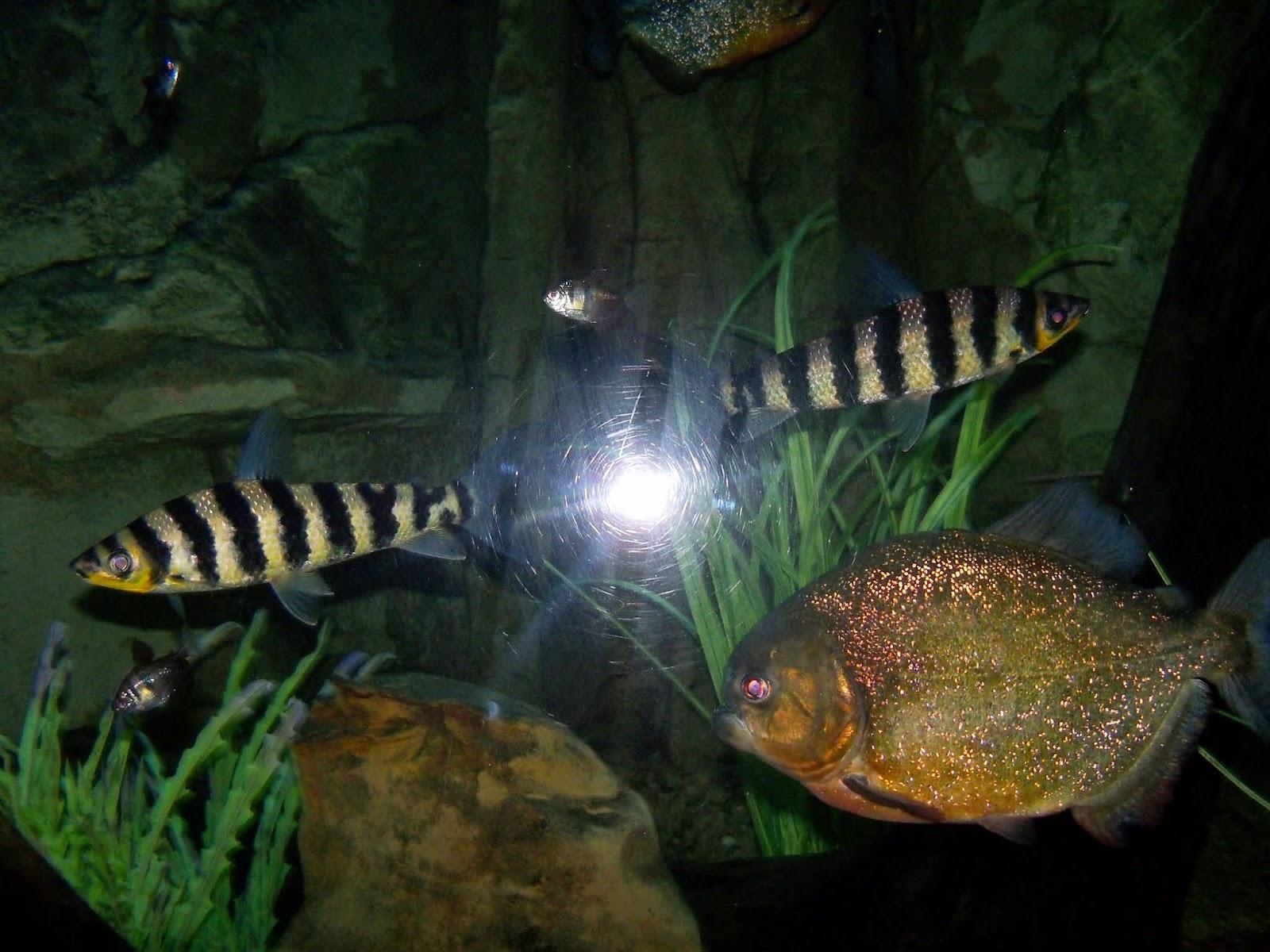 Downtown Aquarium - 116_3875.JPG