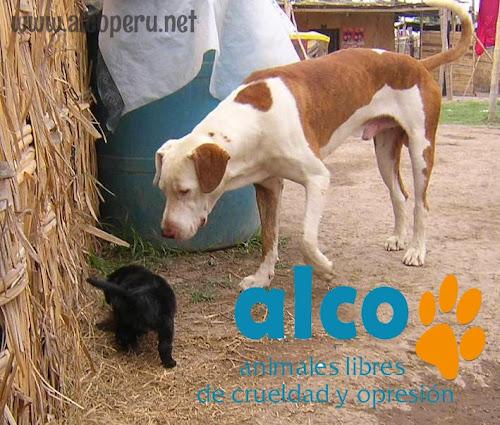 Asistencia Hualcara Cañete terremoto 2007 (16)