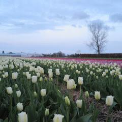 Weekend Noord Holland 2016 - IMG_6486_800x534.JPG