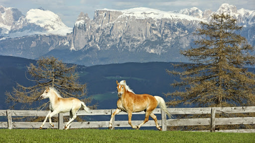 Haflinger Horse and Foal.jpg