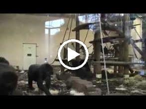 Video: amsterdam, garden, holland, netherlands, travel, zoological