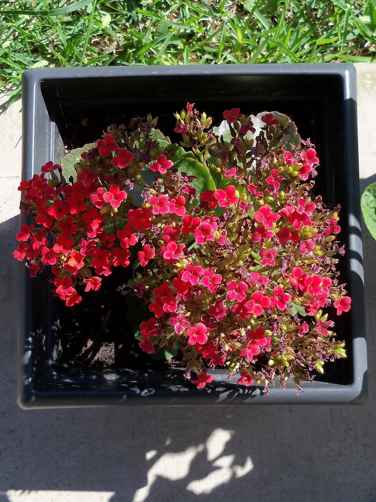 Gardening 2010 - 101_1332.JPG