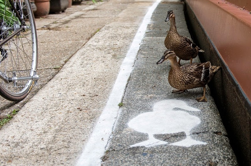 duck-lanes-canal-river-trust-2