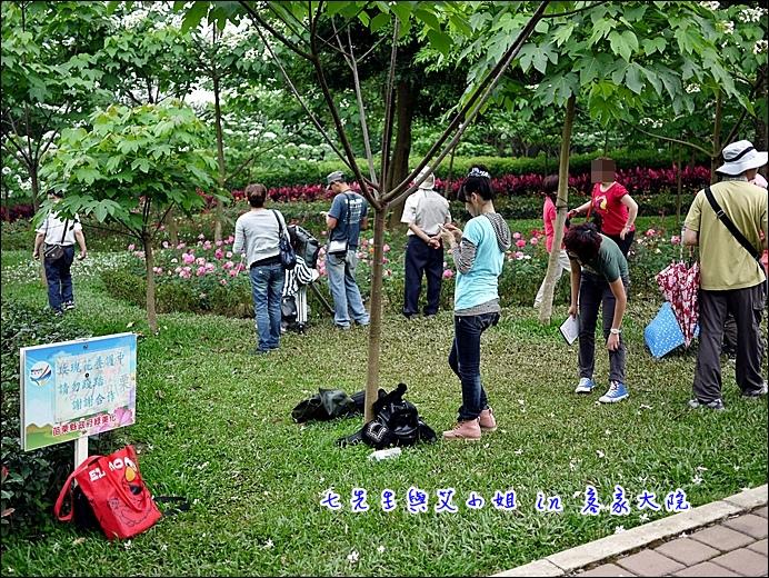 15 玫瑰花養護中