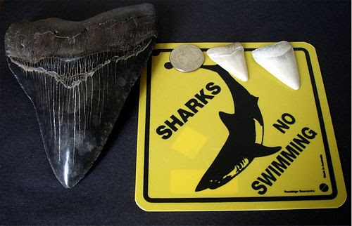 瀬戸内海サメ騒動