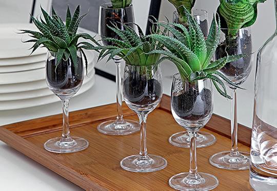 suculentas plantadas em taças