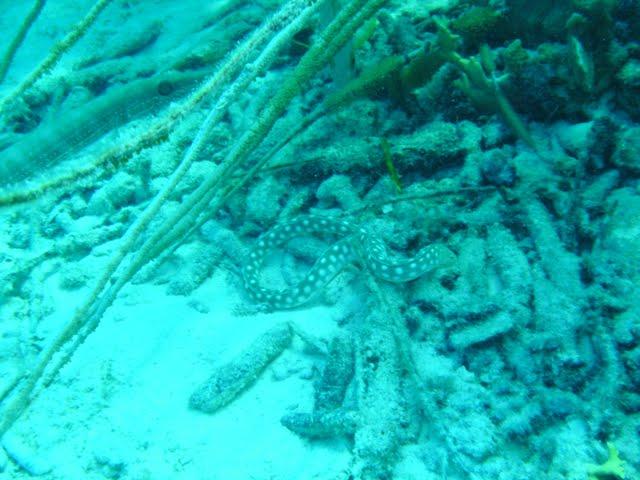 Bonaire 2011 - PICT0167.JPG