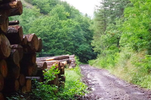 Chemin La Rodé (620 m), Cocurès (Lozère, France), 2 août 2014. Photo : J.-M. Gayman