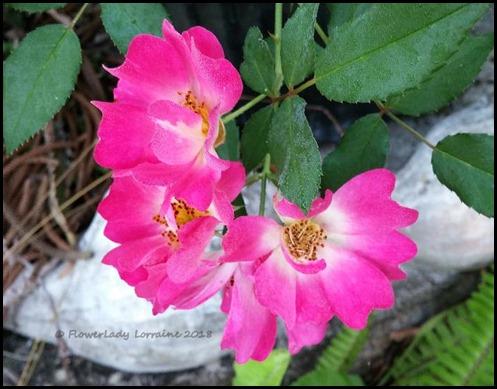 03-01-carpet-roses