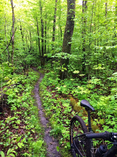 Deep woods singletrack