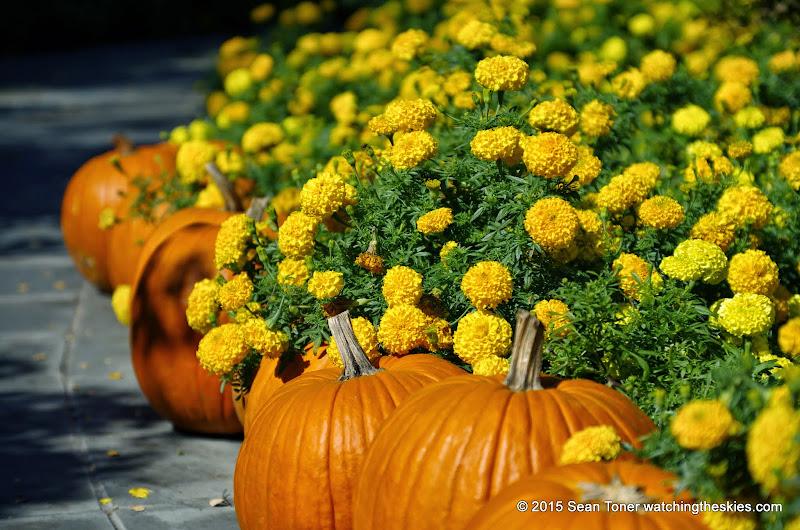 10-26-14 Dallas Arboretum - _IGP4302.JPG
