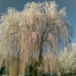 Winter in Leiderdorp