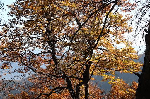 V lese pod Žobrákom